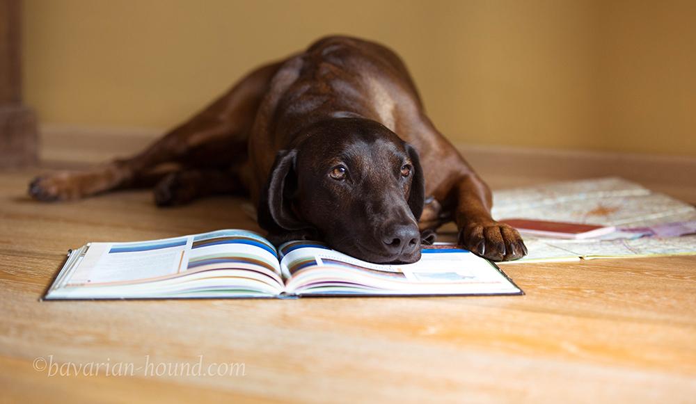 Как получить ветеринарное свидетельство